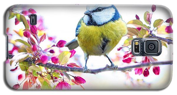 Yellow Blue Bird With Flowers Galaxy S5 Case