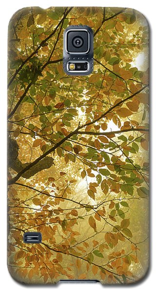 Yellow Fall Leaves - Blue Ridge Parkway Galaxy S5 Case