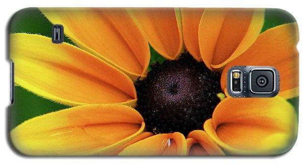 Yellow Flower Black Eyed Susan Galaxy S5 Case