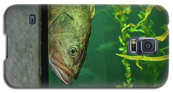 Yellowtail Rockfish Playing Peekaboo Galaxy S5 Case