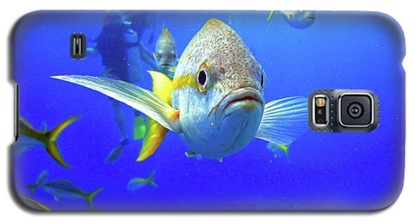 Yellowtails Galaxy S5 Case