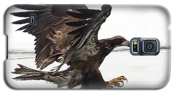 Young Bald Eagle Galaxy S5 Case