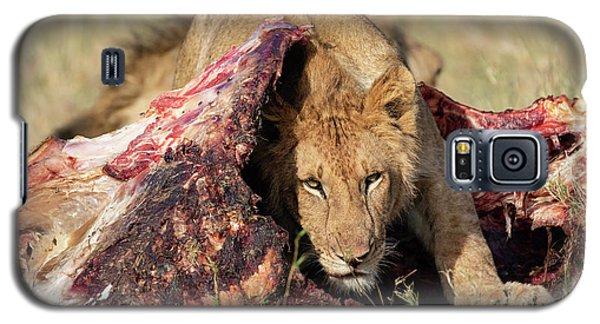 Young Lion On Cape Buffalo Kill Galaxy S5 Case