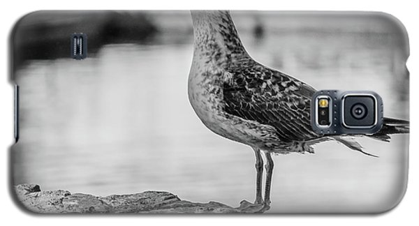 Young Seagull Galaxy S5 Case