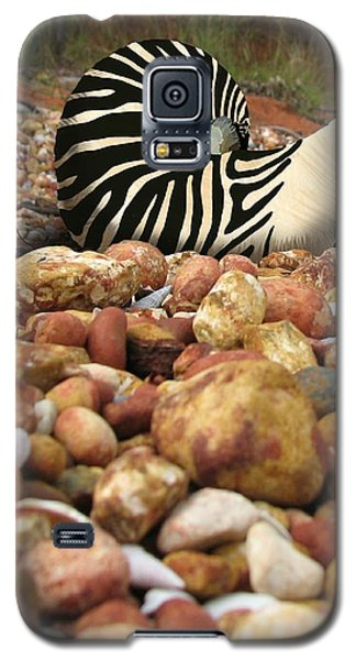 Zebra Nautilus Shell On Bauxite Beach Galaxy S5 Case