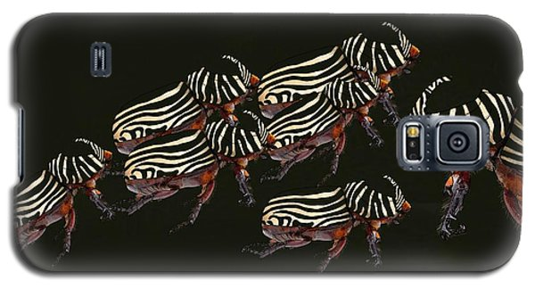 Zebra Pattern Rhinoceros Beetle 3 Galaxy S5 Case