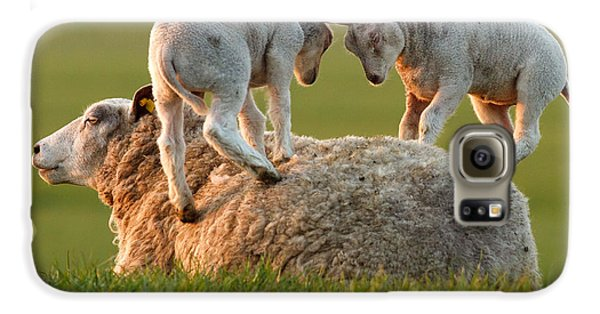 Leap Sheeping Lambs Galaxy S6 Case by Roeselien Raimond
