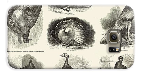 1868 Darwin Pigeon Breeds Illustration Galaxy S6 Case by Paul D Stewart