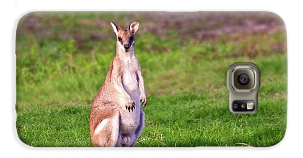 A Male Grey Kangaroos (macropus Galaxy S6 Case