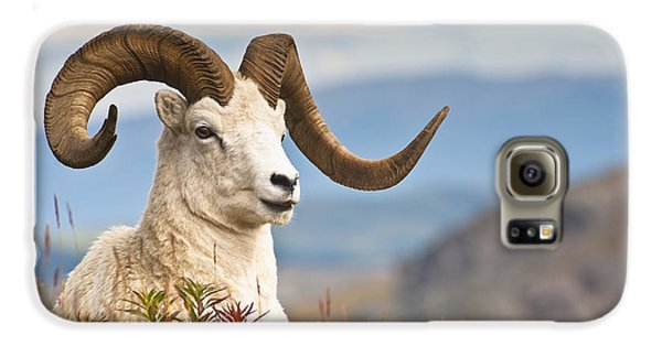 Adult Dall Sheep Ram Resting Galaxy S6 Case by Michael Jones