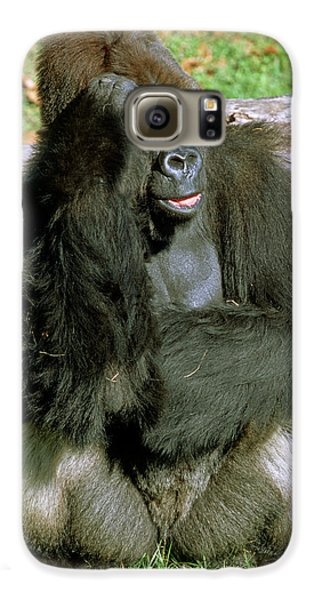 Adult Male Western Lowland Gorilla Galaxy S6 Case