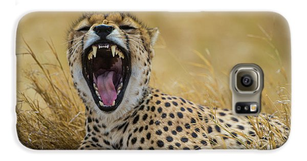 Africa Tanzania Cheetah (acinonyx Galaxy S6 Case