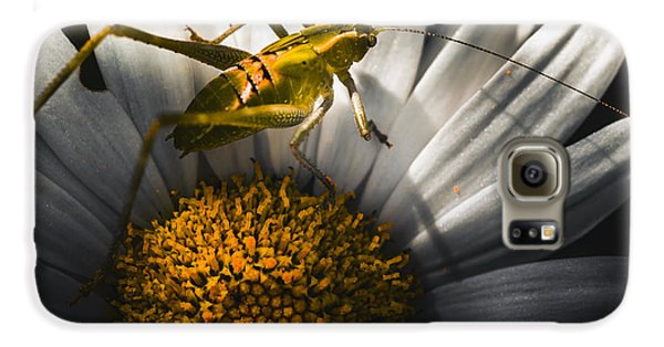Australian Grasshopper On Flowers. Spring Concept Galaxy S6 Case by Jorgo Photography - Wall Art Gallery