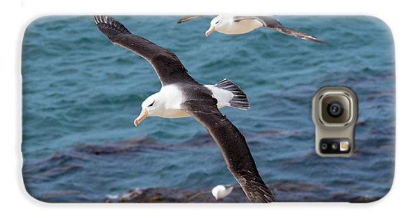 Black-browed Albatross (thalassarche Galaxy S6 Case by Martin Zwick