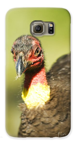 Brush Scrub Turkey Galaxy S6 Case by Jorgo Photography - Wall Art Gallery