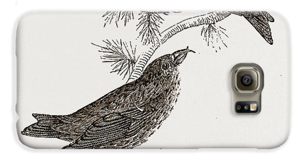 Crossbills Galaxy S6 Case by Litz Collection