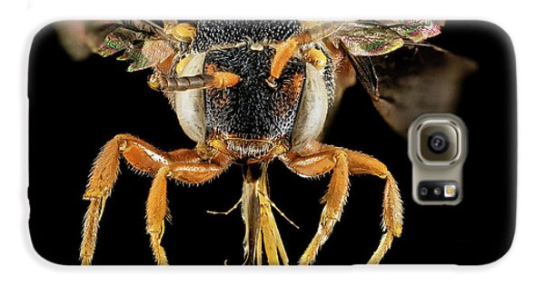 Cuckoo Galaxy S6 Case - Cuckoo Bee by Us Geological Survey