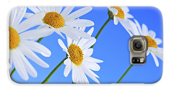 Daisy Flowers On Blue Background Galaxy S6 Case by Elena Elisseeva