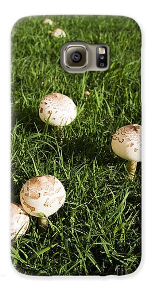 Field Of Mushrooms Galaxy S6 Case by Jorgo Photography - Wall Art Gallery