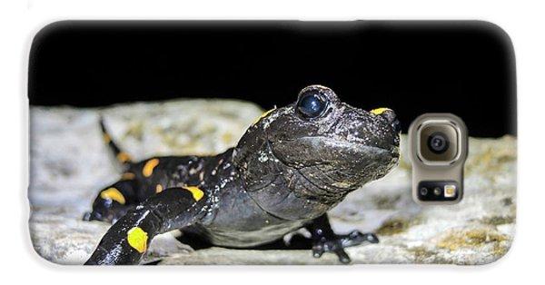 Fire Salamander (salamandra Salamandra) Galaxy S6 Case by Photostock-israel