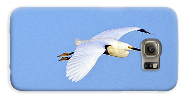 Florida, Venice, Snowy Egret Flying Galaxy S6 Case