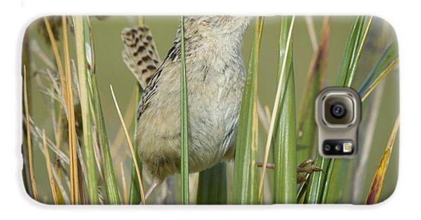 Grass Wren Galaxy S6 Case by John Shaw