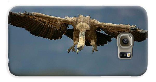 Griffon Galaxy S6 Case - Griffon Vulture Flying by Nicolas Reusens