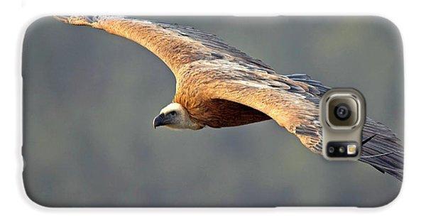 Griffon Vulture In Flight Galaxy S6 Case by Bildagentur-online/mcphoto-schaef