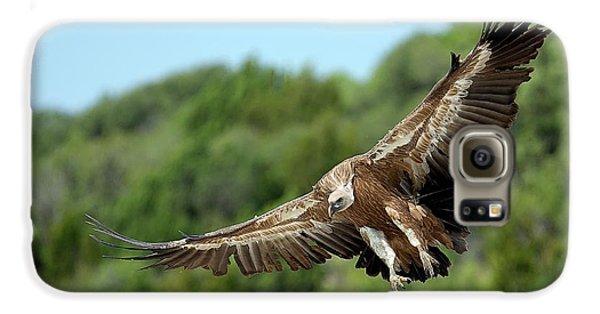 Griffon Galaxy S6 Case - Griffon Vulture by Nicolas Reusens