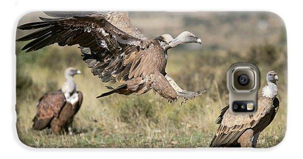 Griffon Galaxy S6 Case - Griffon Vultures by Nicolas Reusens