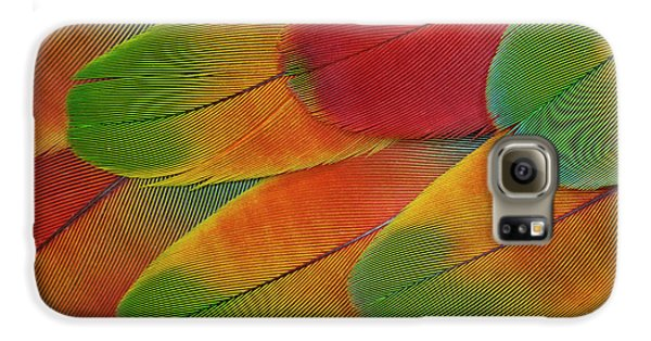 Harlequin Macaw Wing Feather Design Galaxy S6 Case by Darrell Gulin