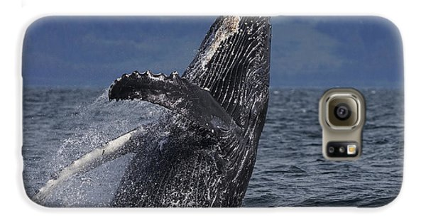 Humpback Whale Breaching Prince William Galaxy S6 Case by Hiroya Minakuchi