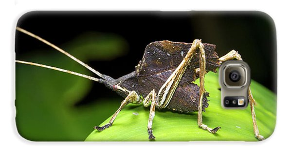 Leaf Mimic Bush-cricket Galaxy S6 Case by Dr Morley Read