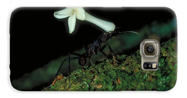 Leafcutter Ant Galaxy S6 Case by Gregory G. Dimijian