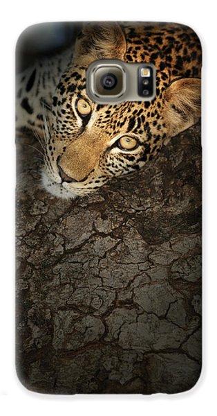 Leopard Galaxy S6 Case - Leopard Portrait by Johan Swanepoel