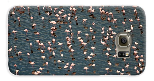 Lesser Flamingo, Lake Nakuru, Kenya Galaxy S6 Case by Panoramic Images