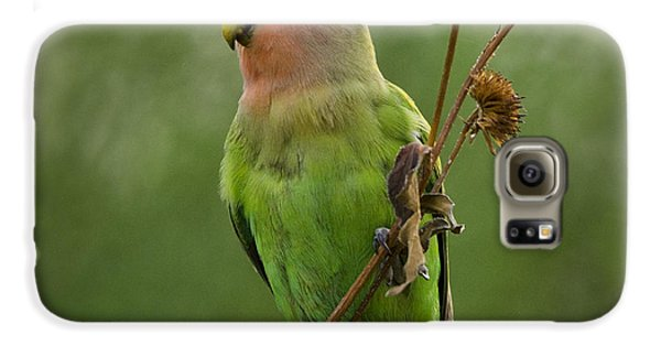 Lovely Little Lovebird  Galaxy S6 Case by Saija  Lehtonen