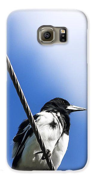 Magpie Up High Galaxy S6 Case by Jorgo Photography - Wall Art Gallery
