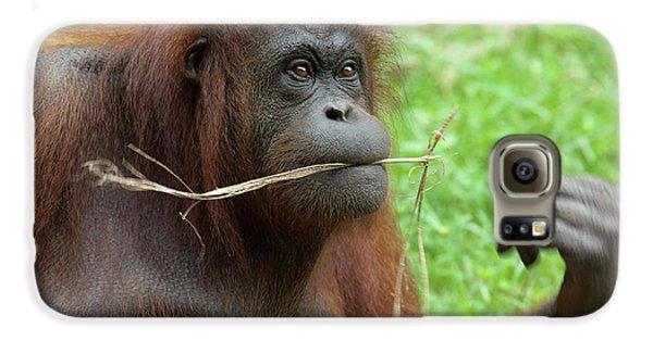 Malaysia, Borneo, Sabah, Kota Kinabalu Galaxy S6 Case by Cindy Miller Hopkins