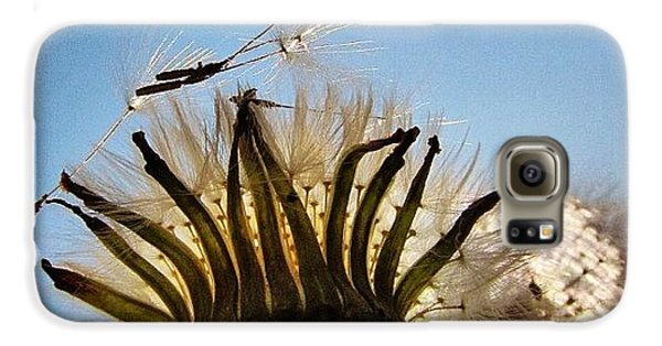 Sky Galaxy S6 Case - #mgmarts #dandelion by Marianna Mills