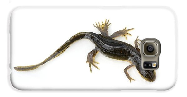 Mutated Eastern Newt Galaxy S6 Case by Lawrence Lawry