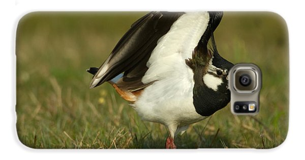 Lapwing Galaxy S6 Case - Northern Lapwing by Helmut Pieper