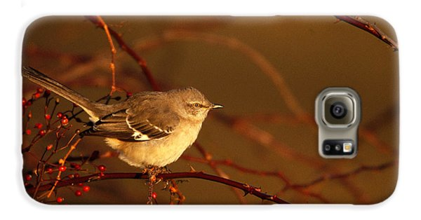 Northern Mockingbird Mimus Polyglottos Galaxy S6 Case by Paul J. Fusco