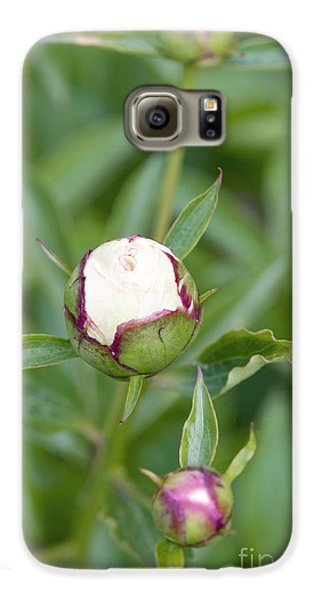 Paeonia Lactiflora Shirley Temple Galaxy S6 Case by Jon Stokes