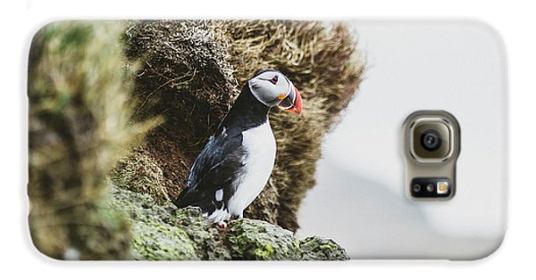 Puffin Galaxy S6 Case - Puffins On The Islet Of Mykines, Faroe by Sergio Villalba