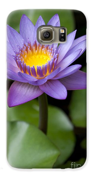 Radiance Galaxy S6 Case by Sharon Mau