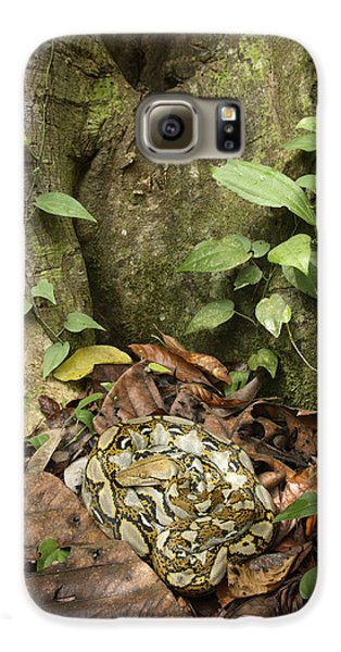 Reticulated Python Galaxy S6 Case