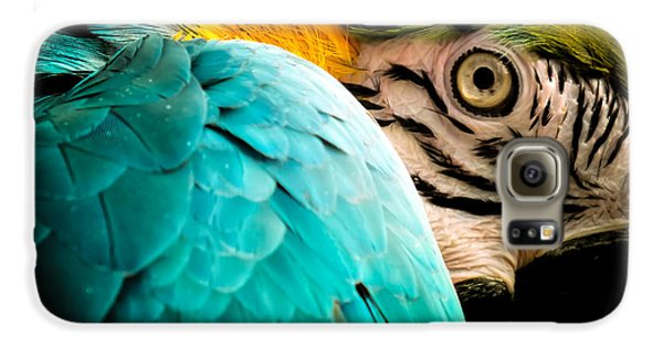 Macaw Galaxy S6 Case - Sleeping Beauty by Karen Wiles