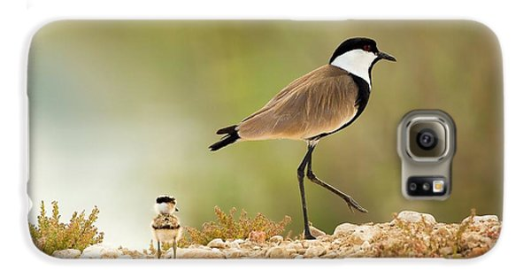 Spur-winged Lapwing Vanellus Spinosus Galaxy S6 Case by Photostock-israel