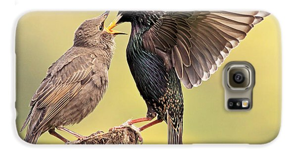 Starlings Galaxy S6 Case by Grant Glendinning